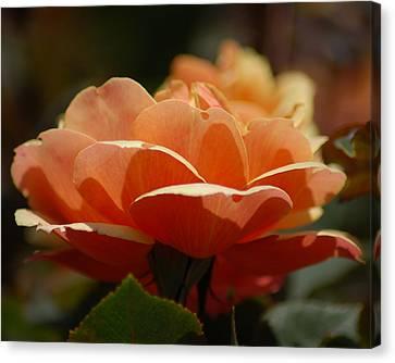 Soft Orange Flower Canvas Print by Matt Harang