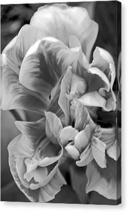 Soft Petal Lady Canvas Print by Leslie Cruz