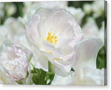 Canvas Print featuring the photograph White Flower Is Beautiful by Haleh Mahbod