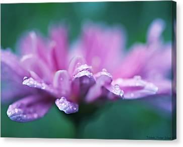 Soft Pink Canvas Print by Michaela Preston