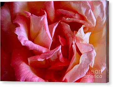 Canvas Print featuring the photograph Soft Pink Petals Of A Rose by Janice Rae Pariza