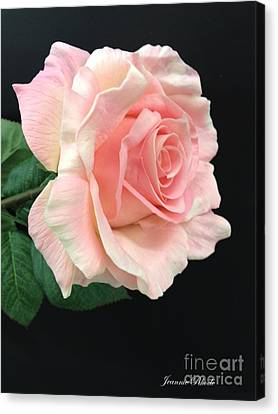 Canvas Print featuring the photograph Soft Pink Rose 1 by Jeannie Rhode