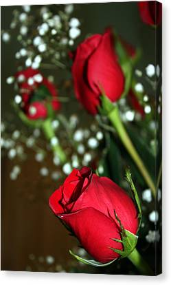 Soft Roses Canvas Print