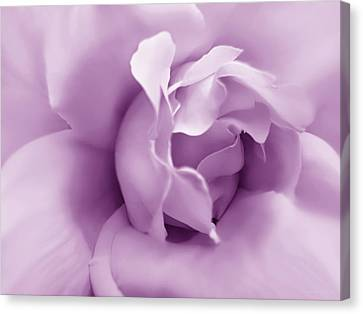 Soft Violet Rose Flower Canvas Print by Jennie Marie Schell
