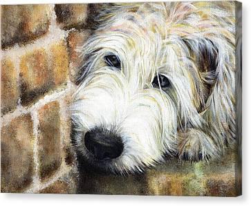 Soft Wheaten Terrier Canvas Print by Natasha Denger