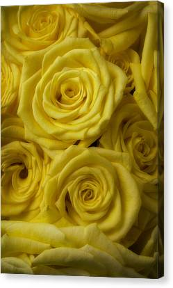 Soft Yellow Roses Canvas Print by Garry Gay