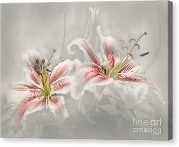Soften Lilies Canvas Print