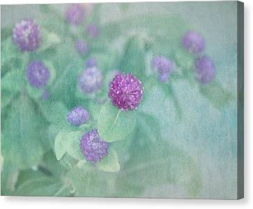 Softly Clover Canvas Print by Kim Hojnacki