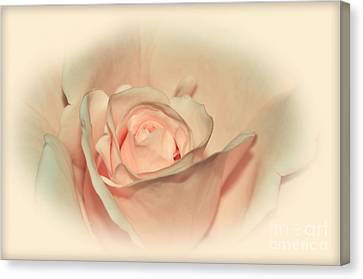 Softly Peach Canvas Print by Kaye Menner