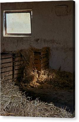 Horse Stable Canvas Print - Softly The Sun by Odd Jeppesen