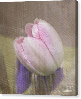 Softly Tulip Canvas Print by Arlene Carmel