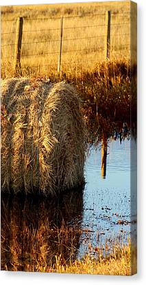 Soggy Bottom Feed Canvas Print by Kerri Huven