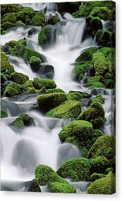 Sol Duc Stream Canvas Print