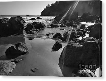 Muir Beach  Canvas Print by Scott Cameron