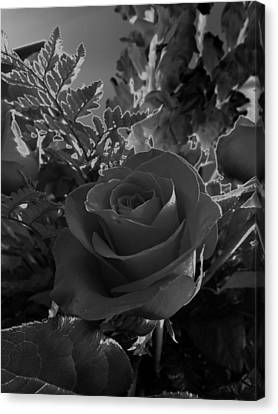 Canvas Print featuring the photograph Solarized Rose by Scott Kingery