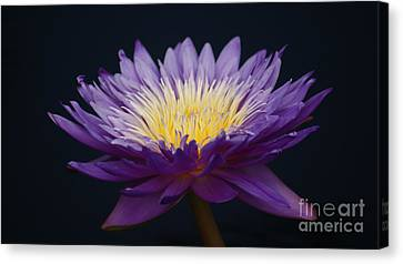 Blending Canvas Print - Solita Side...   # by Rob Luzier