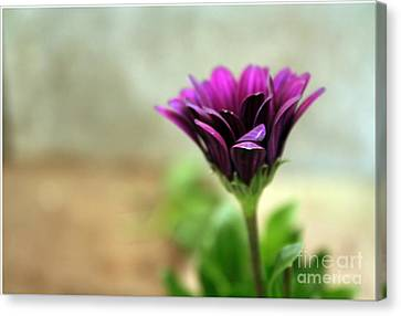 Canvas Print featuring the photograph Solitaire by Chris Anderson