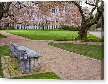 Canvas Print featuring the photograph Solitary Bench by Sonya Lang