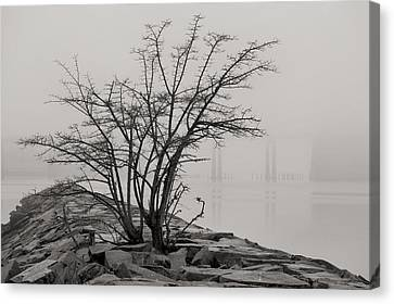 Solitary  Canvas Print by JC Findley