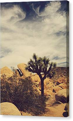Solitary Man Canvas Print by Laurie Search