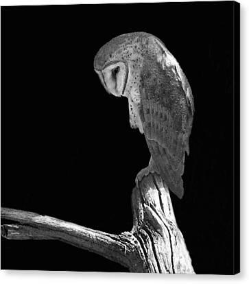 Solitary Owl Canvas Print