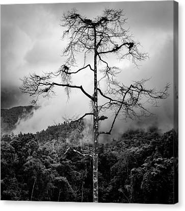 Solitary Tree Canvas Print by Dave Bowman