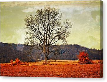 Solitary Tree Canvas Print by Marty Koch