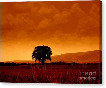 Solitude Canvas Print by Janine Riley