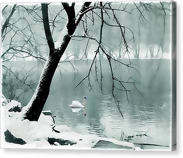 Swans... Canvas Print - Solitude by Jessica Jenney