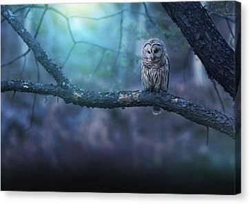 Solitude - Landscape Canvas Print