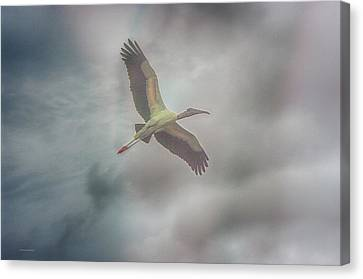 Canvas Print featuring the photograph Solo Flight by Dennis Baswell