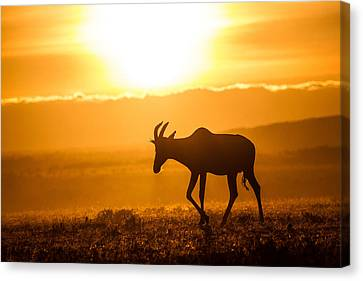 Canvas Print featuring the photograph Solo Topi Sunrise by Mike Gaudaur