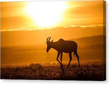 Solo Topi Sunrise Canvas Print by Mike Gaudaur