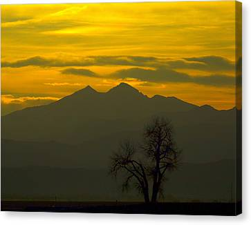 Solo Tree With Longs Peak Canvas Print by Rebecca Adams