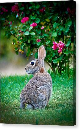 Canvas Print featuring the photograph Some Bunny Loves You by Dee Dee  Whittle