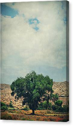 Some Days I Believe Canvas Print by Laurie Search