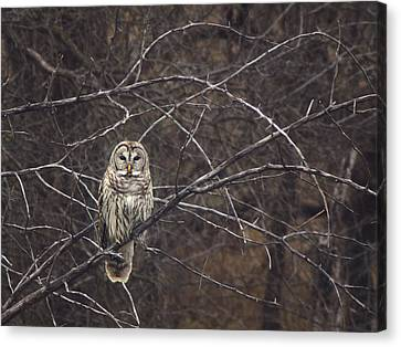 Somebody's Watching Me  Canvas Print by Kimberly Danner