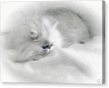 Somebodys White Darling Canvas Print by Gun Legler