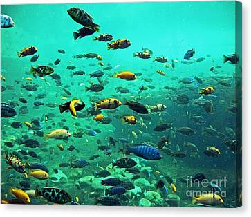 Something Fishy Canvas Print by Kevin Fortier