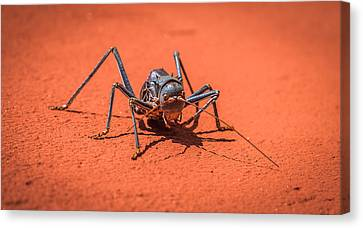 Something To Bug You - Armored Katydid Photograph Canvas Print by Duane Miller