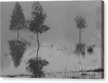 Something To Reflect On Canvas Print by Linda Lees