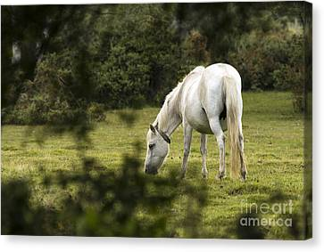 Somewhere In The Forest Canvas Print by Angel  Tarantella