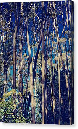 Somewhere Only We Know Canvas Print by Laurie Search