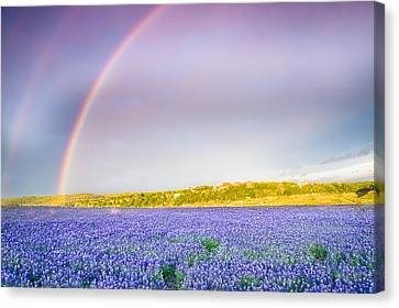 Somewhere Over The Rainbow - Wildflower Field In Texas Canvas Print