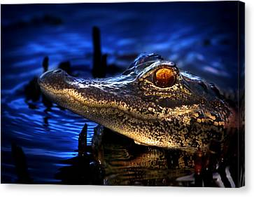 Son Of A Gator Canvas Print