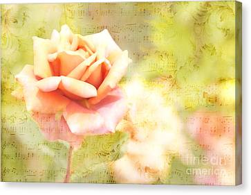 Song Of Spring II - Lovely Pale Orange Rose Canvas Print by Beverly Claire Kaiya