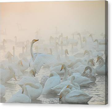 Song Of The Morning Light Canvas Print