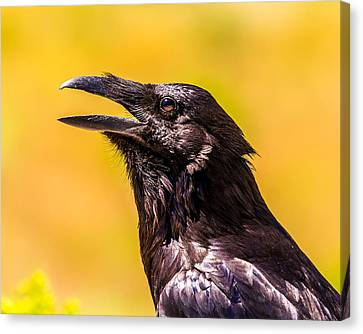 Song Of The Raven Canvas Print