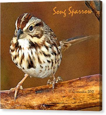 Canvas Print featuring the photograph Song Sparrow On Tree Branch by A Gurmankin