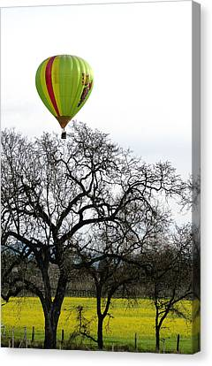 Sonoma Hot Air Balloon Over Mustard Field Canvas Print